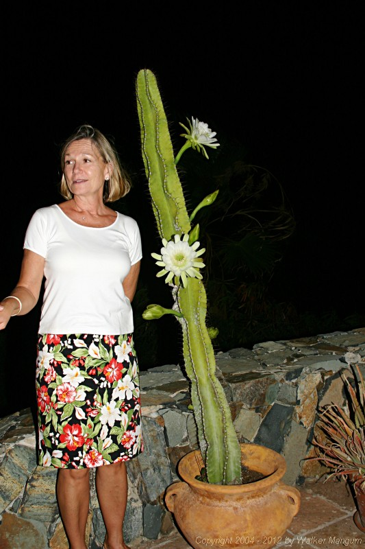Night blooming cactus at Carolyn Chaney's house.  What is Carolyn doing up at 1:00AM???