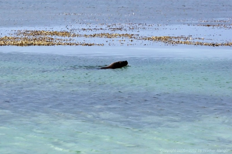 We were fishing on Anegada when we spotted something strange - a sea lion. This is the first sea lion ever seen in the BVI.
