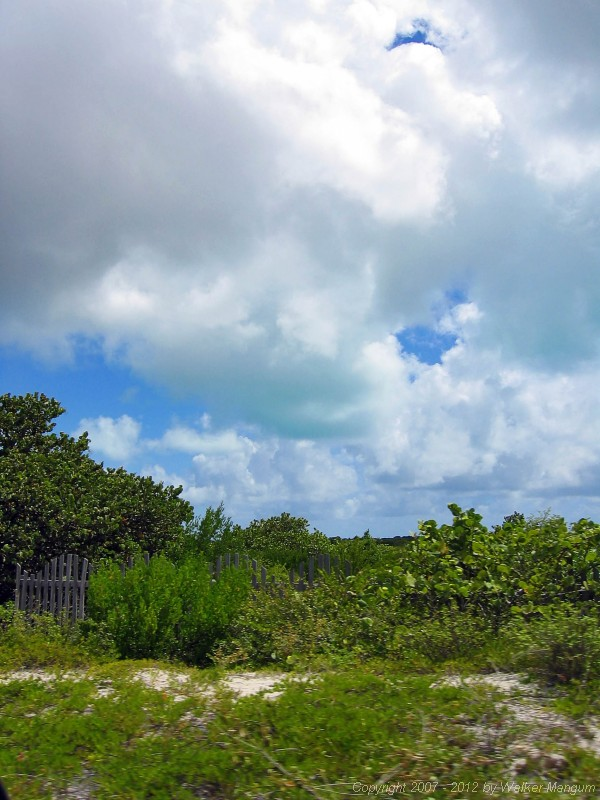 Anegada green cloud.