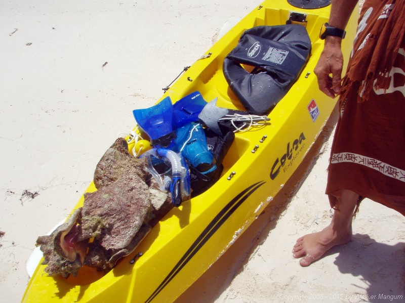 Kayak load of conch for dinner.