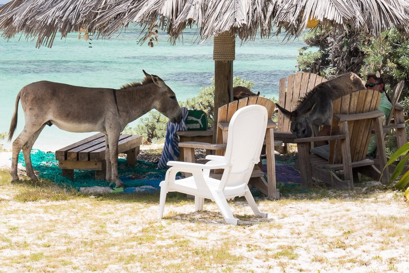 Asses under the palapa